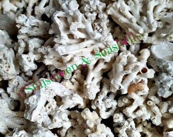 White Coral Pieces Handcollected