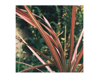 A3 Fine art photography print, nature, plant, escape, botanical