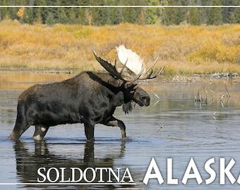 Soldotna, Alaska - Moose Bull in River (Art Prints available in multiple sizes)