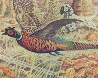 National Sportsman - View of a Hunter and Spaniel Pheasant Hunting; Pheasant Flying away (Art Prints available in multiple sizes)