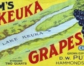 Hammondsport, New York - Putnam's Lake Keuka Concord Grapes Label (Art Prints available in multiple sizes)