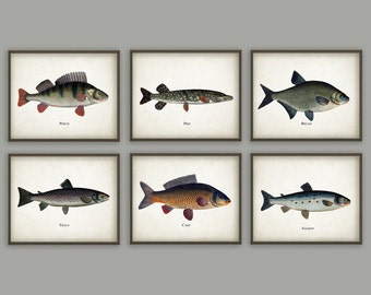 Fishing Art Prints Set Of 6 - Antique Bookplate Fish Illustrations - Angling Wall Art - Pike - Perch - Salmon - Fisherman Gift Idea - AB370