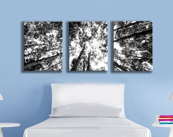 Three multi canvas grouping wall art black and white aspen photograph print 8x10 inch 11x14 small fine art nature home decor twin bed tree
