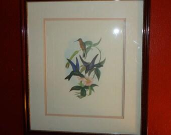 Vintage Painting of Feeding Hummingbirds