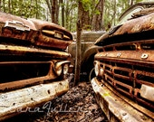 1960 Ford Truck and 1961 Chevy Truck in the woods Photograph
