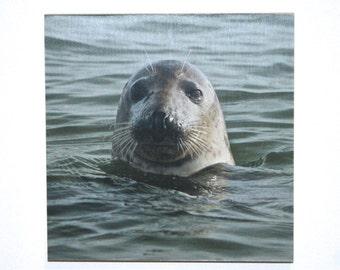 "Seal photo print mounted on wood. 8x8"""
