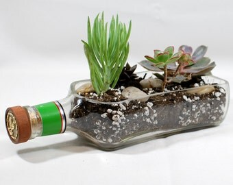 Hornitos Tequila Bottle Planter - Handcrafted from Recycled Liquor Bottle