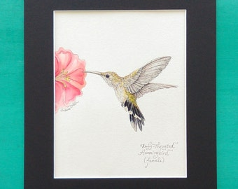 HUMMINGBIRD, Original Watercolor Painting by Susana Caban