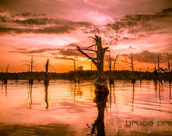 Fire on the Bayou - Photographic Print
