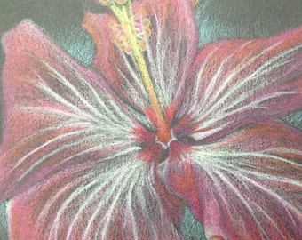 Hibiscus - A Matted Original 5x7 Drawing