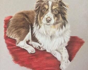 Original Drawing of your Dog -Custom Pet Portrait-colored pencil dog drawing -Mini Aussie-Australian Shepherd-dog art- dog memorial