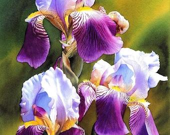 Sunny Iris, Art Print of my original painting, beautiful flowers, watercolor flower, watercolor iris. EsperoArt.