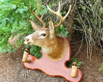 Beautiful Deer Mount With 8 Point Antler Rack
