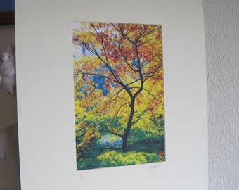 Acer (Hand pulled limited edition screen print)