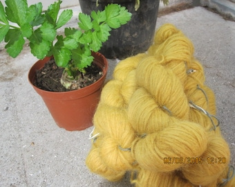 Icelandic pure wool, hand dyed with the root of Rheum rhabarbarum  0413-2