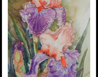 Original watercolor painting, Orange purple iris flower, 150135