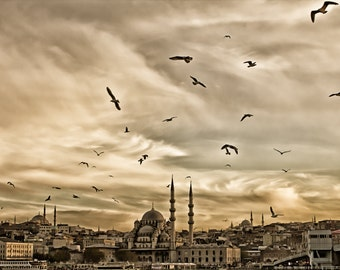 Birds and mosque. Istanbul, Turkey
