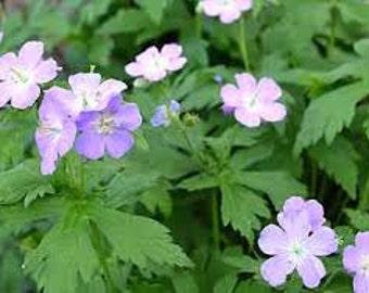 Geranium flowers | Etsy
