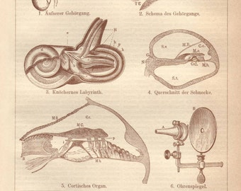 Human ear original 1922 anatomy print - Auditory system, otorhinolaryngology, wall decor - 93 years old German medical illustration (A692)