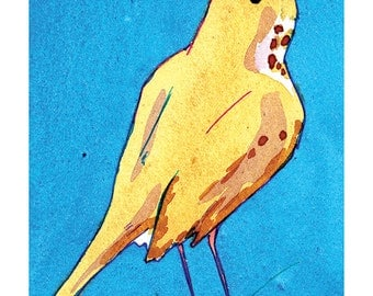 State Birds - Hermit Thrush