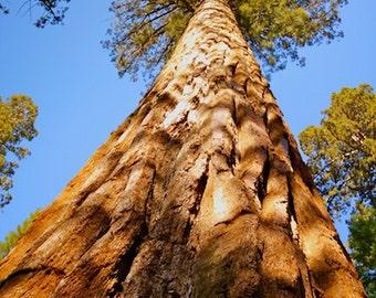 Yosemite print, Yosemite National Park, Nature photography, Tree photography, Tree photos, Wall art