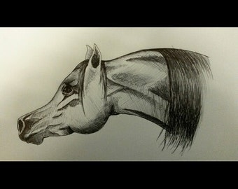 custom drawing of your horse, pet or other animals