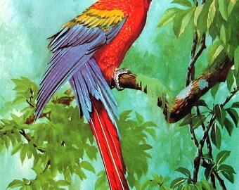Vintage Bird Print - Colorful Macaw - 1973 Vintage Book Page - Naturalist Print - 11 x 8
