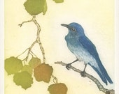 Mountain Bluebird in Aspen Tree, Original Etching