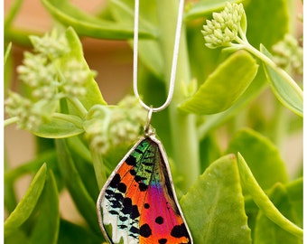 Real Butterfly Wing Necklace. Sunset Moth.