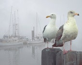 Two Sea Gulls in a Misty Harbor with Sailboats and Fishing Boats on Vancouver Island in British Columbia Canada No.1352 Seascape Photography