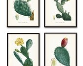 French Cactus Botanical Print Set No. 1, Giclee, Art Prints, Antique Botanical Prints, Wall Art, Prints, Cactus Prints, Desert Art, Flowers