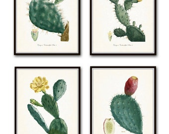 French Cactus Botanical Print Set No. 1, Giclee, Art Prints, Antique Botanical Prints, Wall Art, Prints, Cactus Prints, Desert Art, Flowers