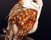 Barn Owl - Large fine art print, 16 x 11 in. Owl painting, watercolour owl, birdpainting, barn owl, owls