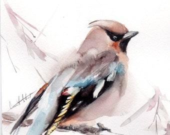 Original Watercolor Painting of Waxwing Bird on a Branch, Bird Watercolour Art