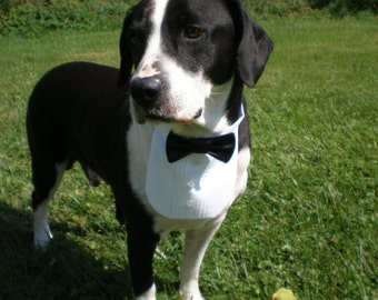 "Dog Tuxedo Shirt and Satin Bow Tie on Collar Will Fit Neck Sizes 12-20"" Most Medium Size Breed Dogs"