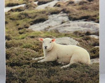 Lazing Lamb - Photo Card