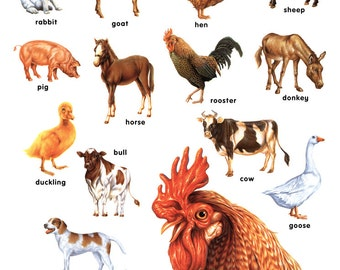 Farm Animals Poster, Chicken, Pig, Cow, Horse, Goat, Turkey, Duck