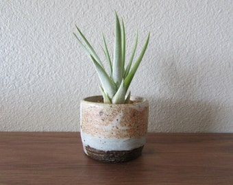 Ceramic Dish with Air Plant