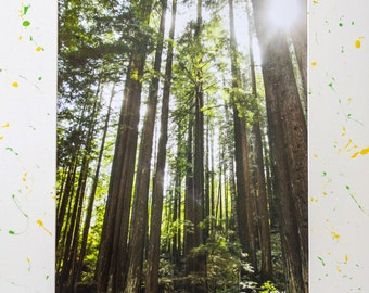8x10 Redwoods, California Photography Print with a 16x20 Hand Painted Mat