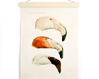 Pull Down Chart - Flamingos Vintage French Zoology Canvas - Illustration by Alphonse Tremeau de Rochebrune - Educational Birds CP252CVL