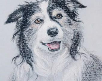 Pet Portrait, 8x10, colored pencil animal portrait, Dog Portrait, Cat Portrait,