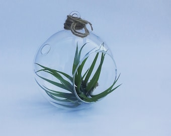 Air Plant Terrarium // Indoor Planters