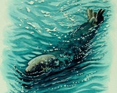 Original Grey Seal Watercolour. Pembrokeshire Grey Seal. Wildlife, Seascapes and beach paintings and signed prints by Andrew Bailey.