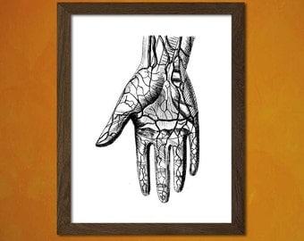 Anatomical Print -  Medical Decor Human Anatomical Poster Anatomy Art Vintage Wall Decor Hand Poster   Reproductiont