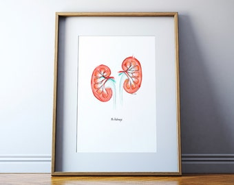 Kidney Watercolor Print - Anatomical Kidney Art - Nephrology Art