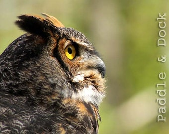 Digital Owl Photo, Great Horned Owl, Instant Download