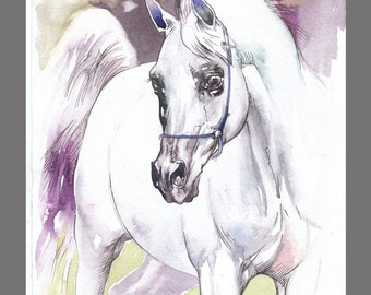White Arabian Horse painting 11.6x16.5 inches Art Print from the Original watercolor Painting