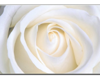 "White Rose Flower Print on Canvas 36 ""x 24"" x 1.5"""
