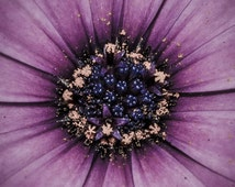Gerbera, purple pretty flower, cottage, classic design instant download available now