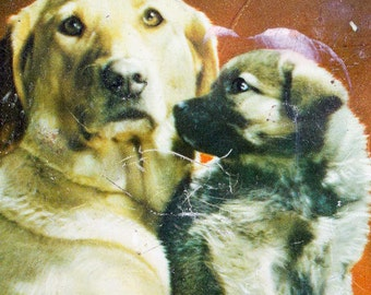 Vintage doggy tin